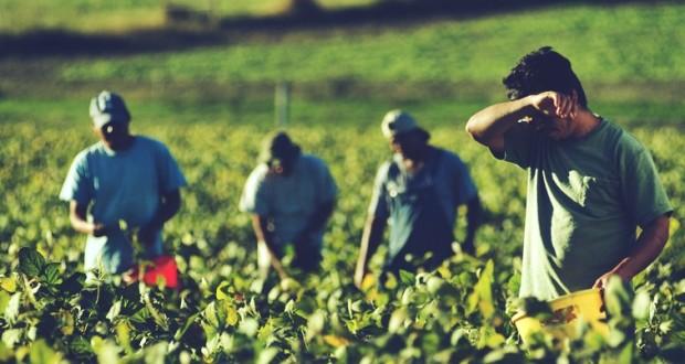 Država da se pozabavi pravima sezonskih radnika