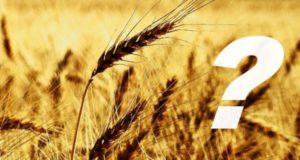 Sloga: Zašto uvozimo hleb i gde je domaće žito?
