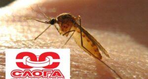Zahtevamo hitnu deratizaciju i prskanje komaraca